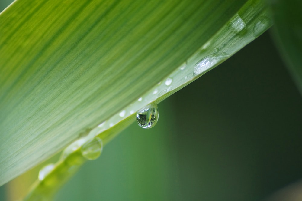 photography of green leafed with water drop