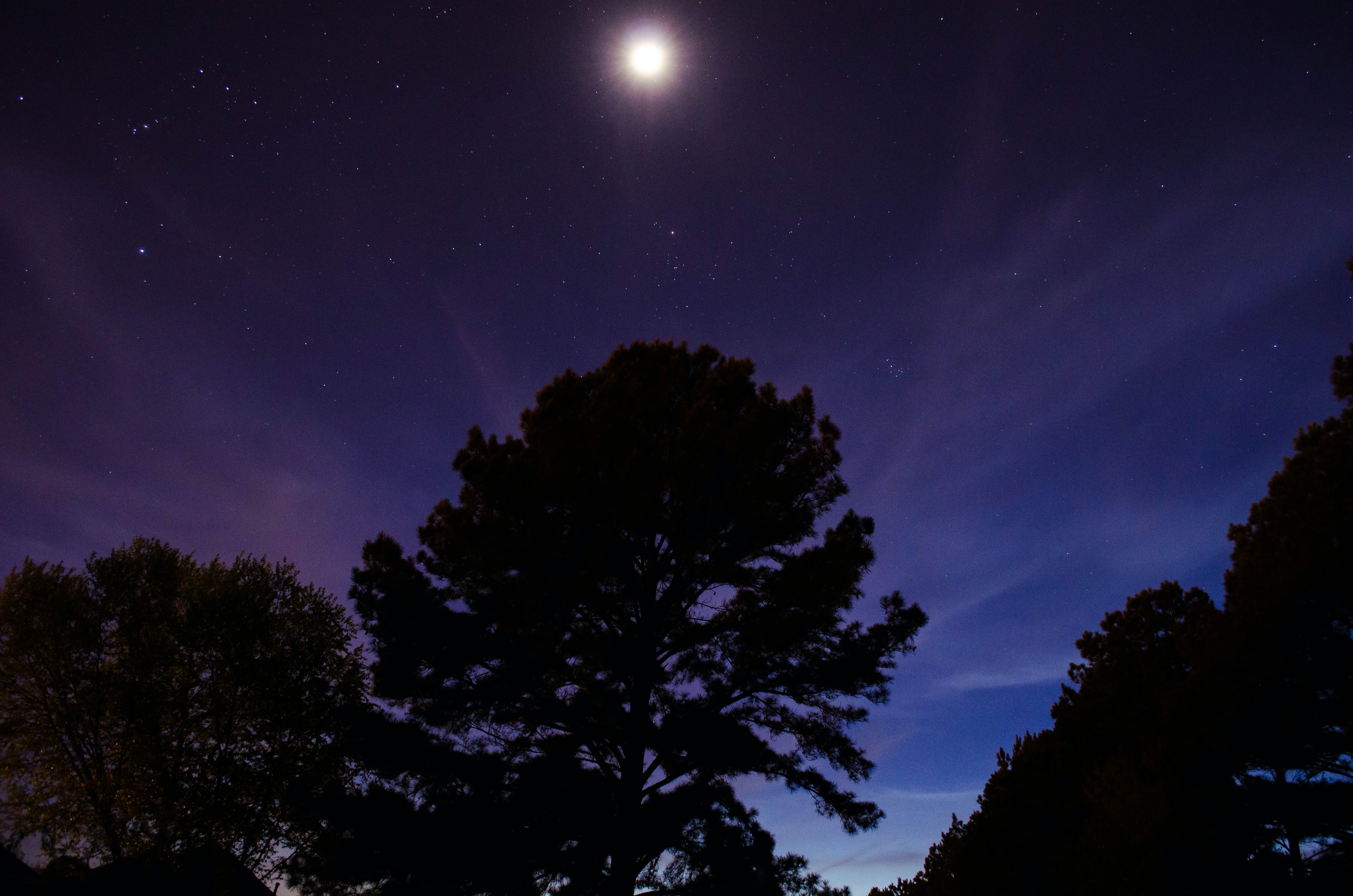 The moon glows at dawn over trees silhouetted against an inky blue sky