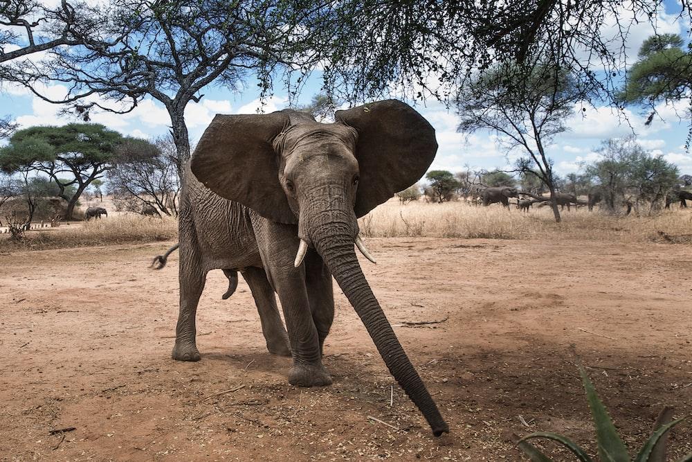 gray elephant under tree during daytime