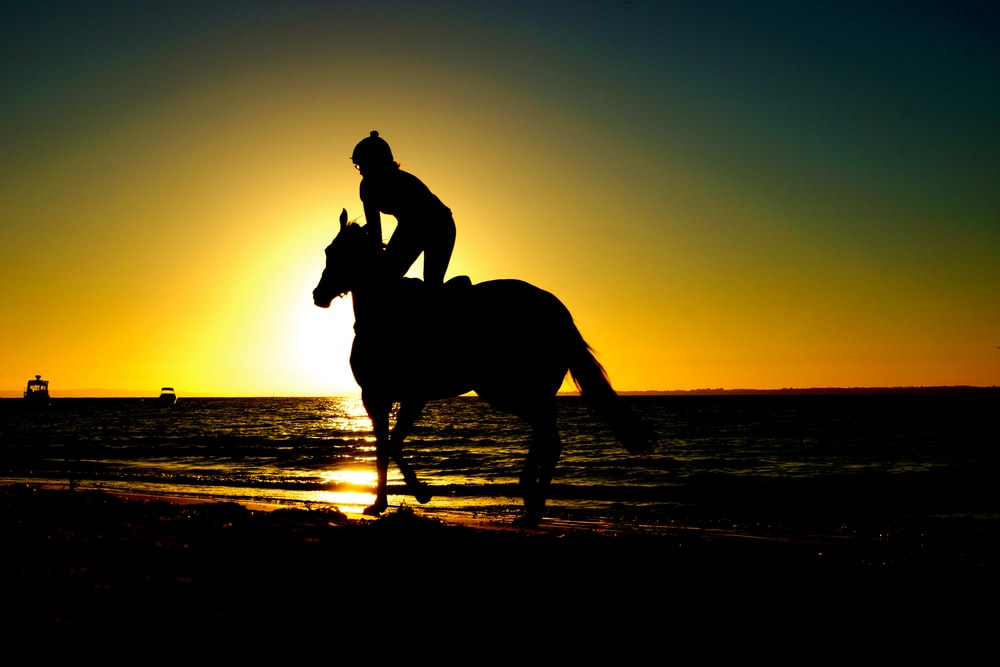silhouette of woman kneeling on horse beside body of water during sunset