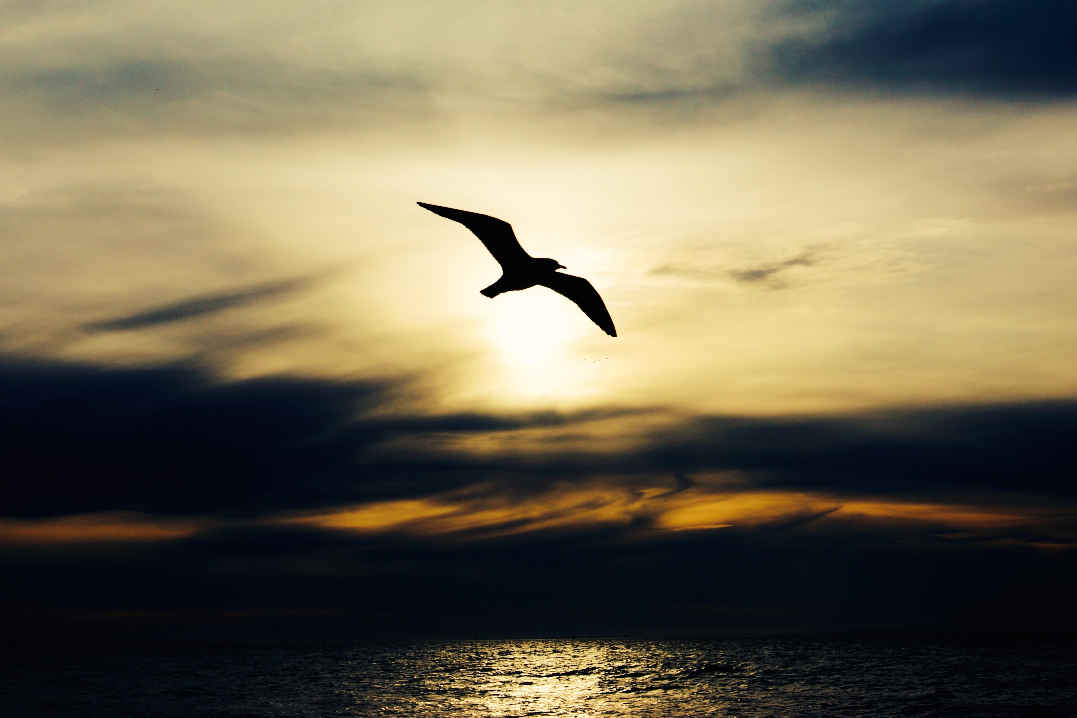 The silhouette of a seagull at dawn against the sky during sunrise