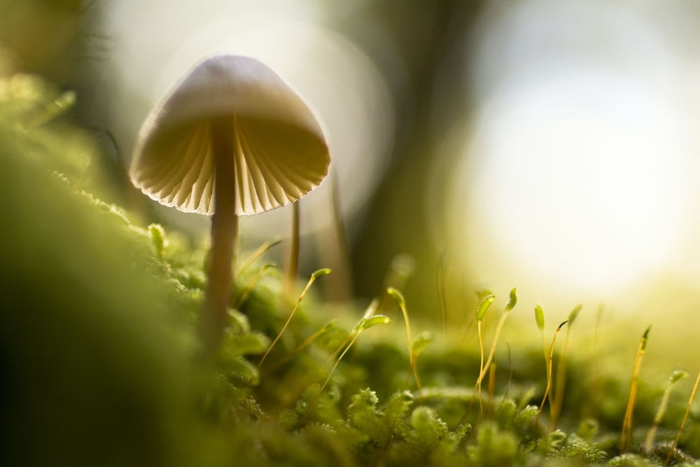 selective focus photograph of mushroom
