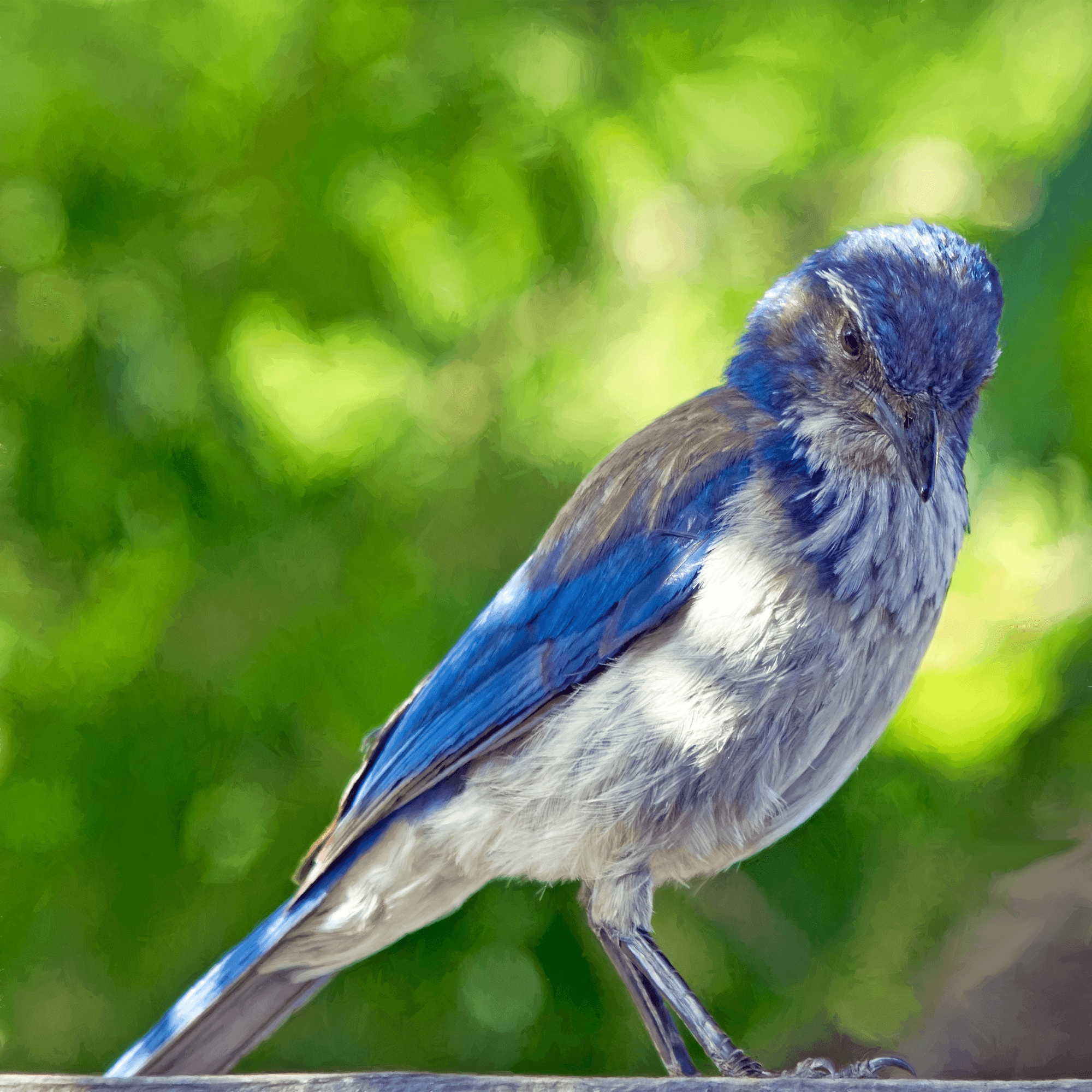 blue and gray bird