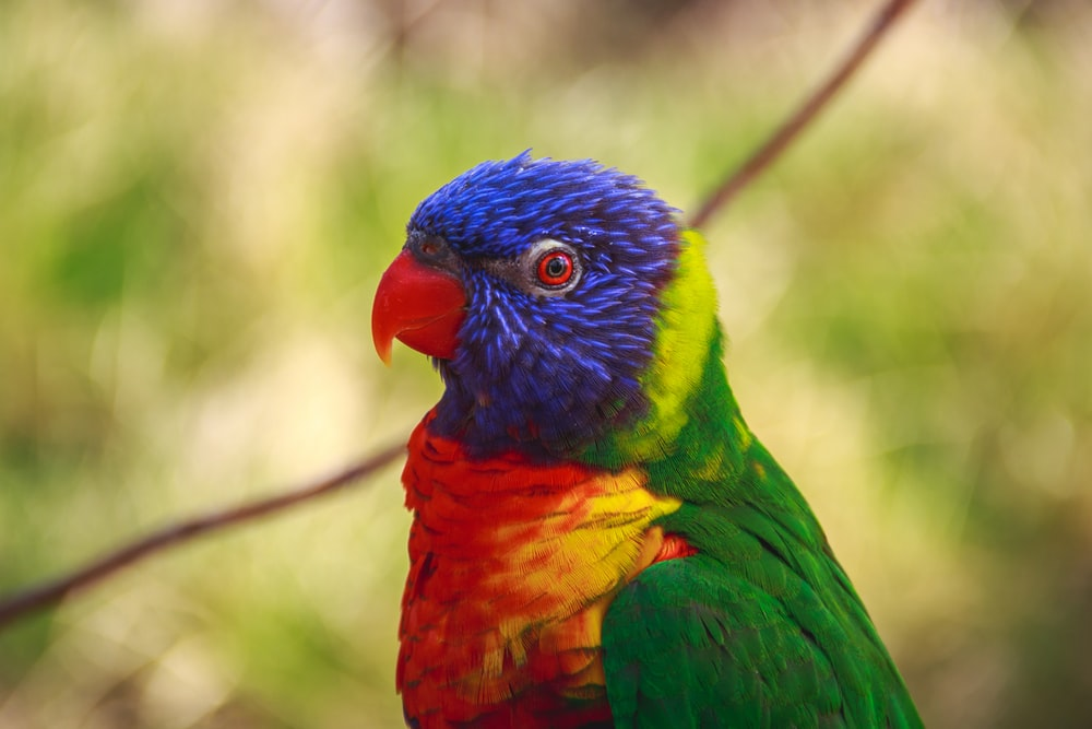 selective focus photography of blue, red, and green bird