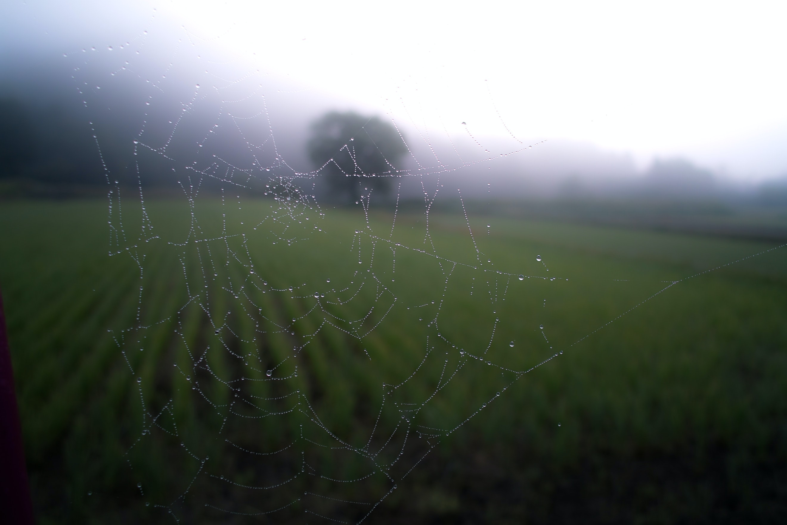 A spiderweb covered with tiny droplets of water against a backdrop of a green field