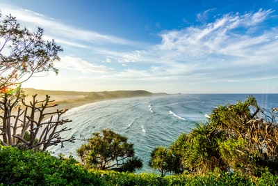 landscape photograph of trees near sea
