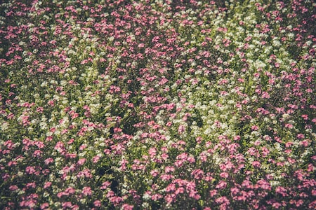 Obtaining Native Wildflowers for Your Garden or Woodsy Area
