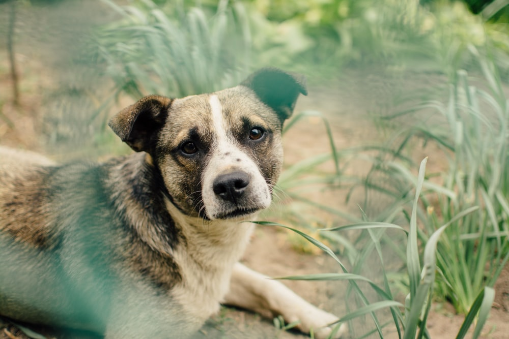 shallow focus photography of dog lying beside grass