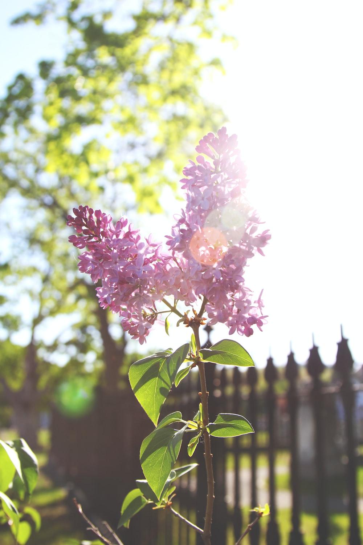 pink petaled floer