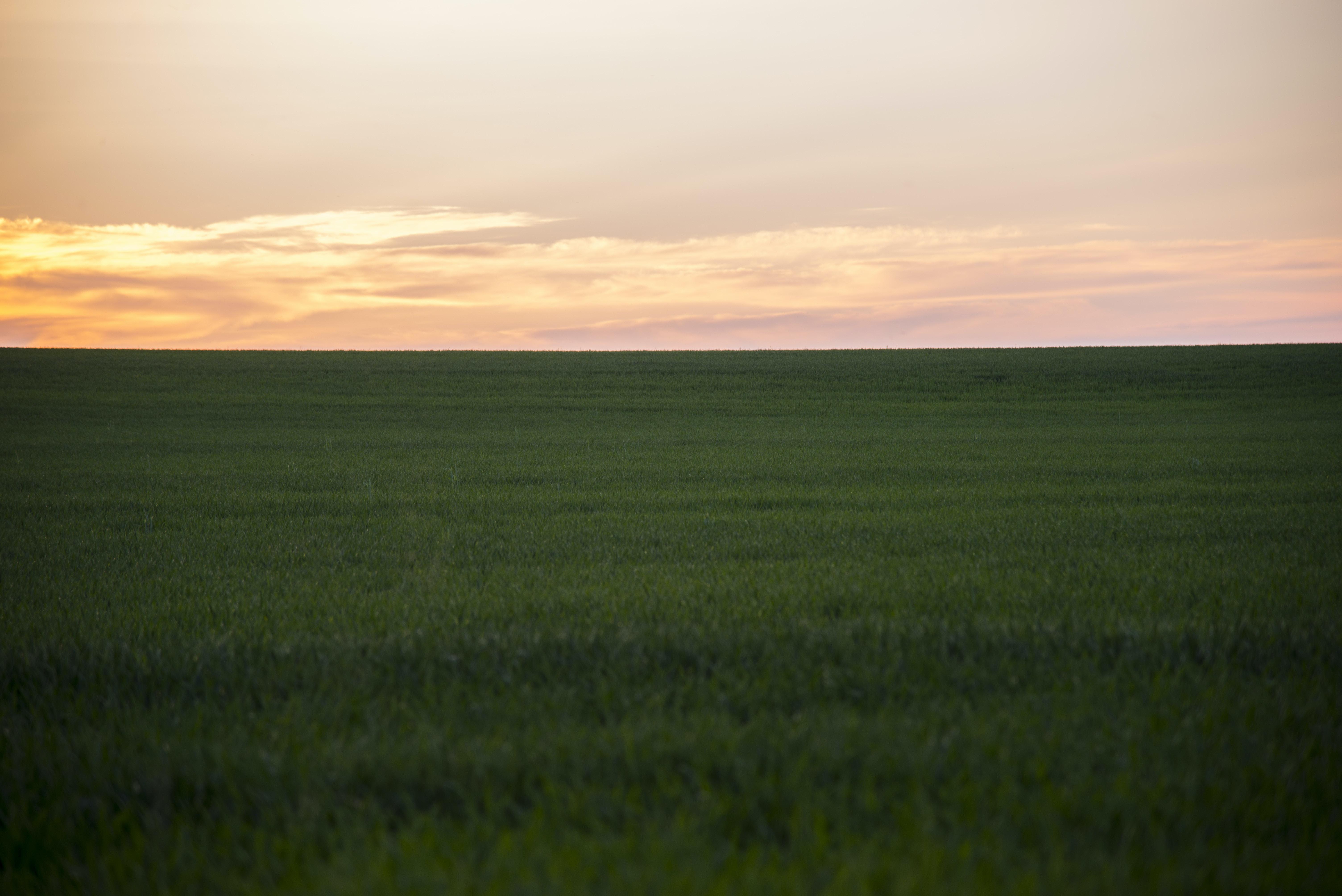 Lush green prairie fields at sunrise