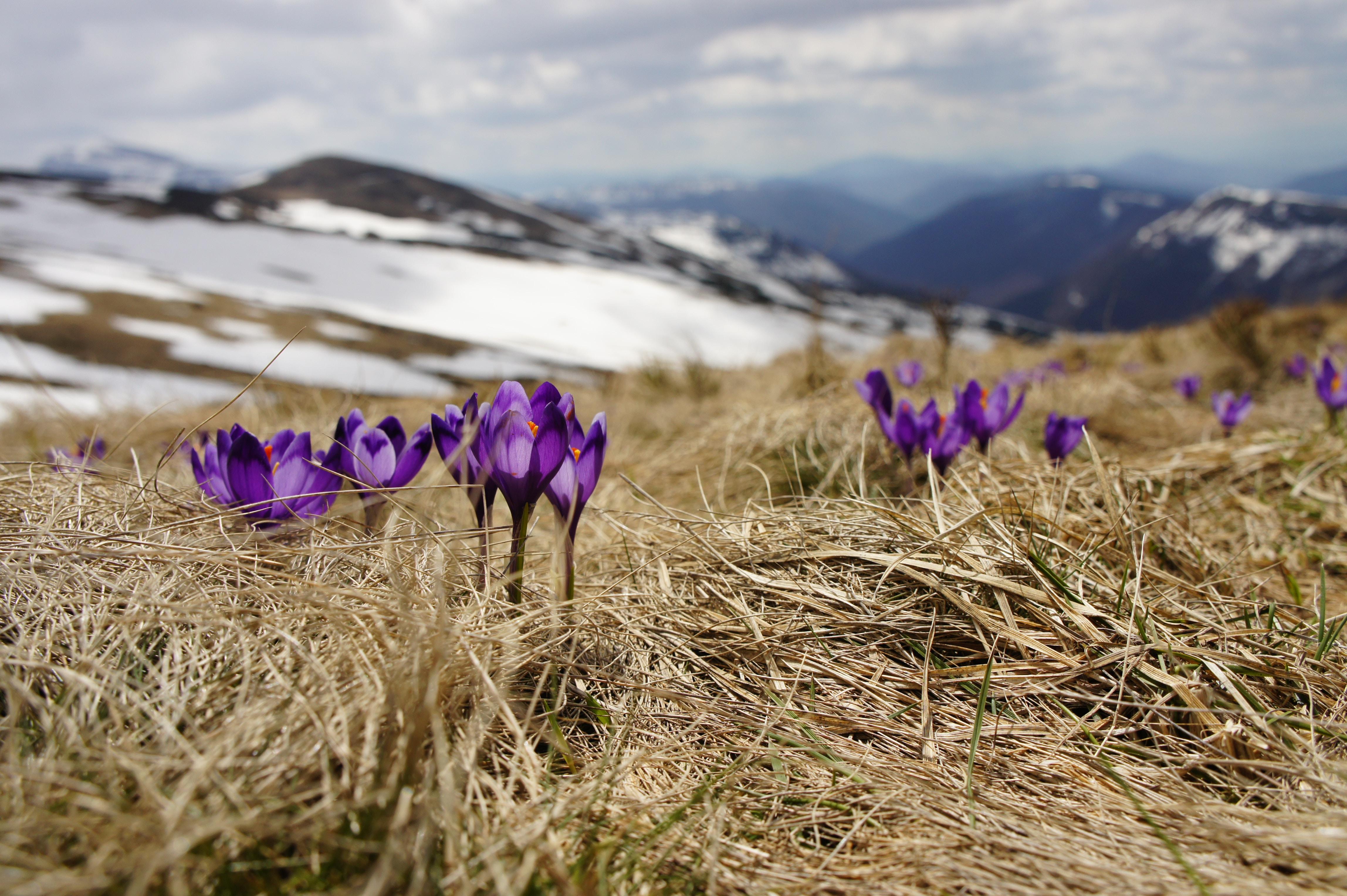 Signs                                 of                                         Spring haiku stories