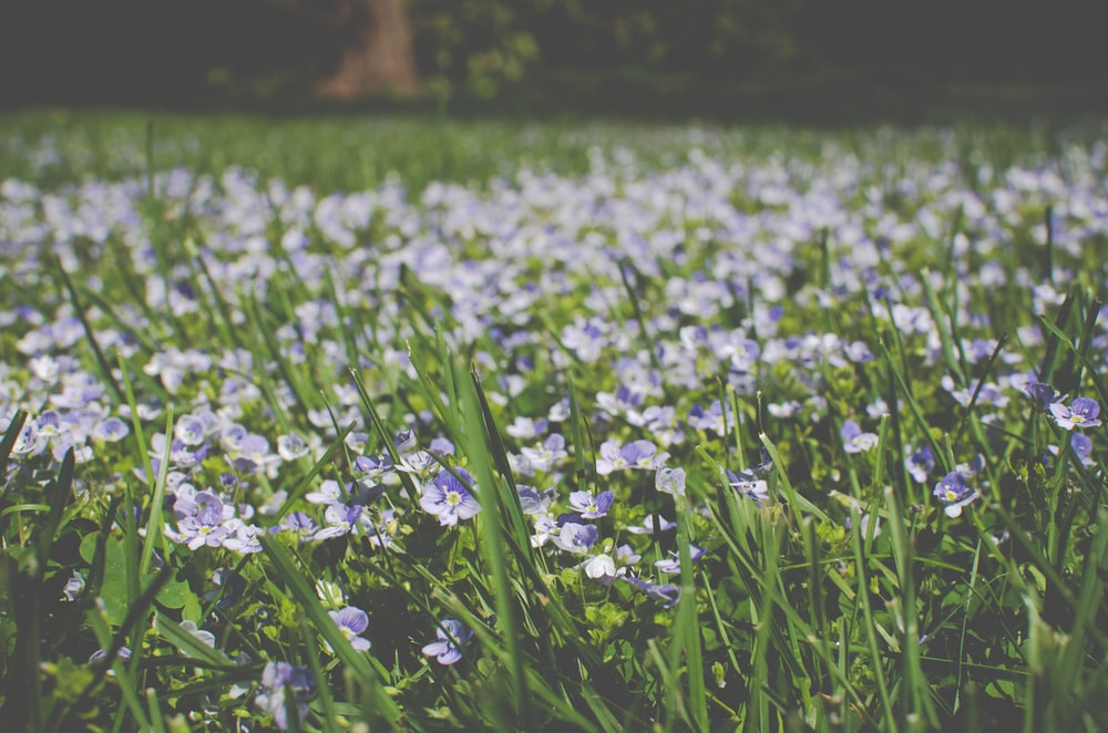 green leafed plants with white flowers