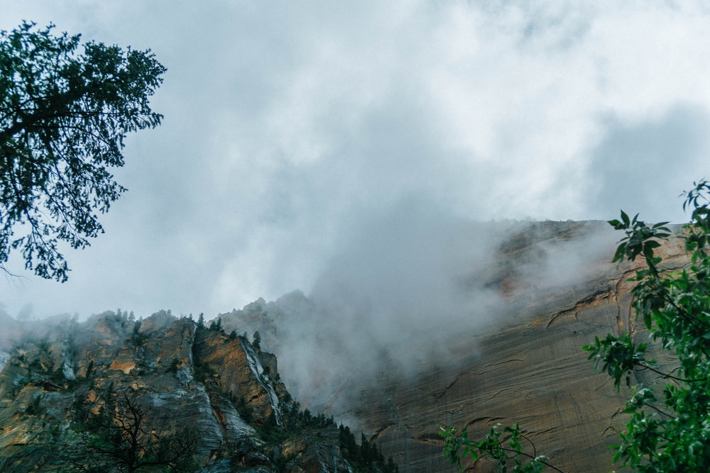 mountains and trees with fog