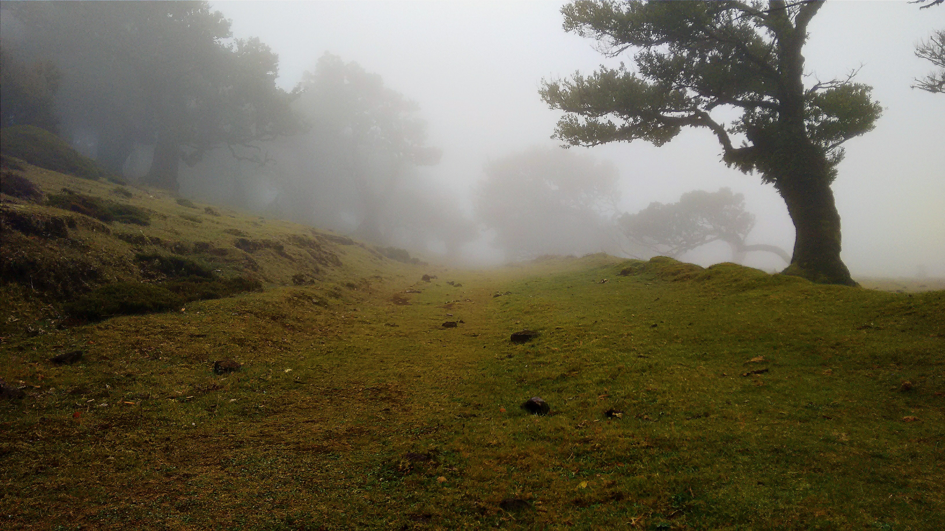 green grass field surrounded by fogs