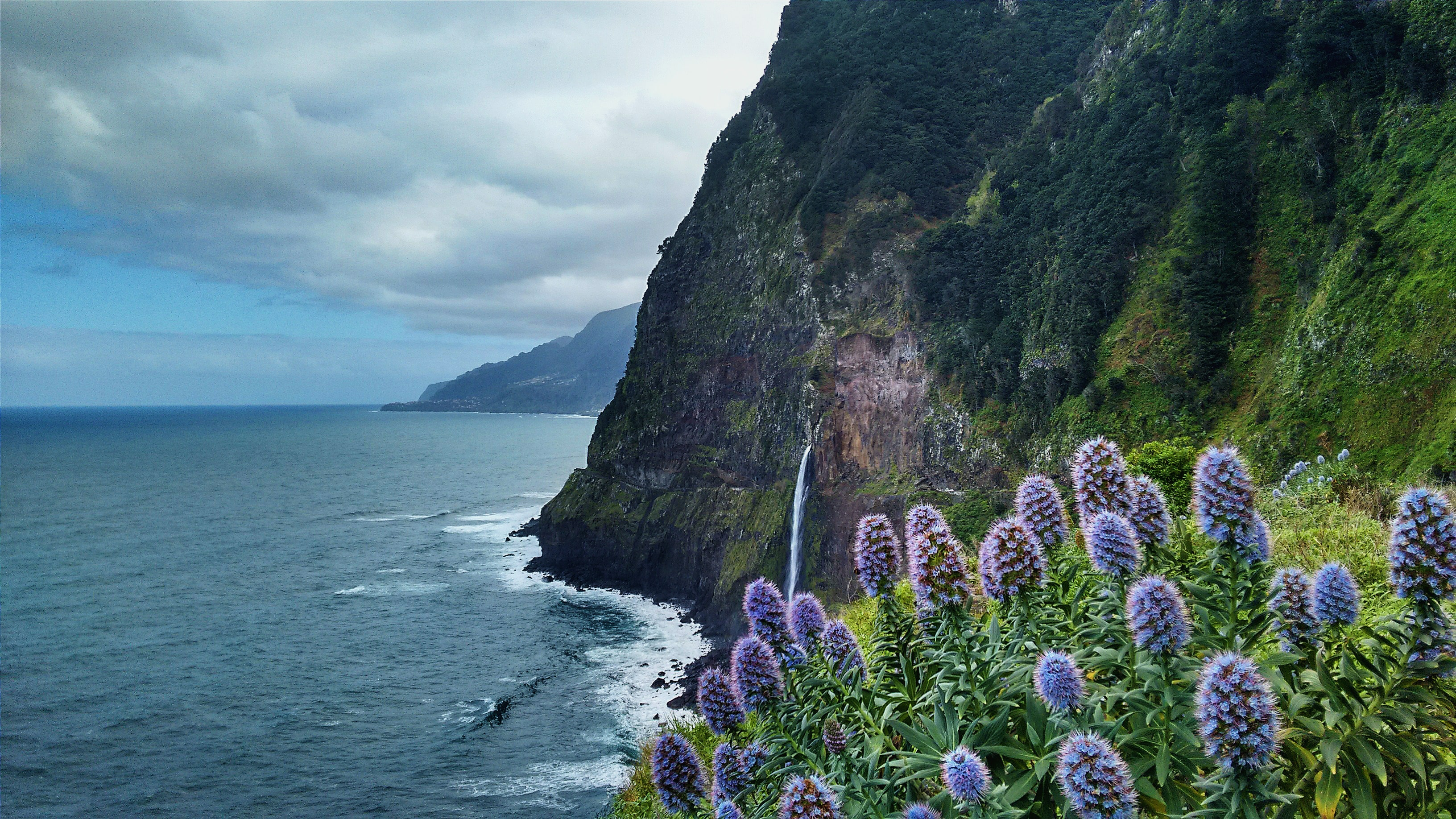 A dense patch of violet flowers on a cliff overlooking a choppy sea