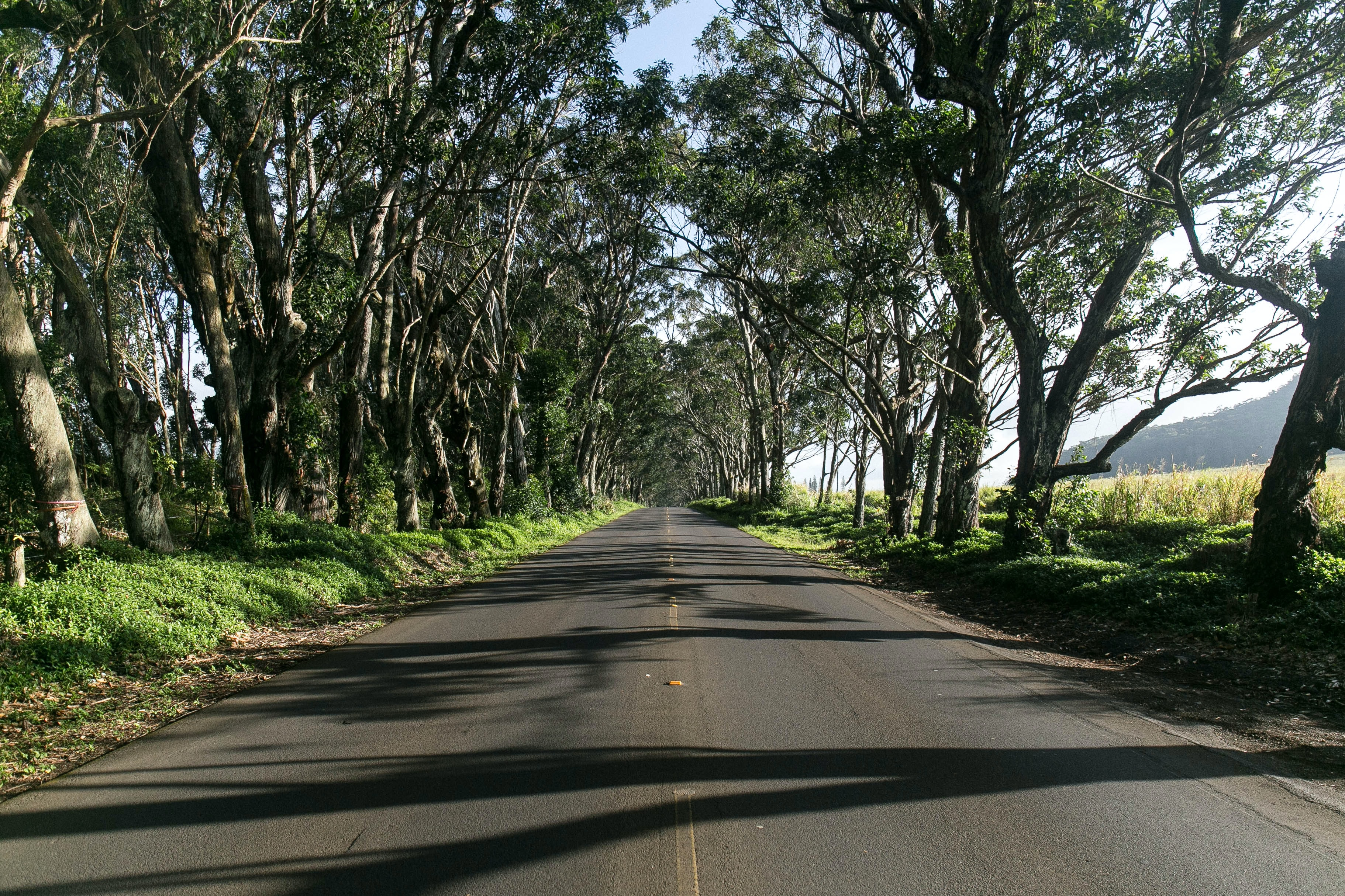 An empty road surrounded by rows of trees
