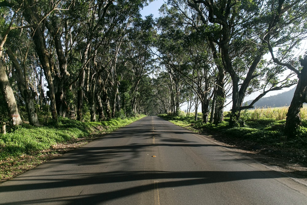 gray road beside trees during daytime