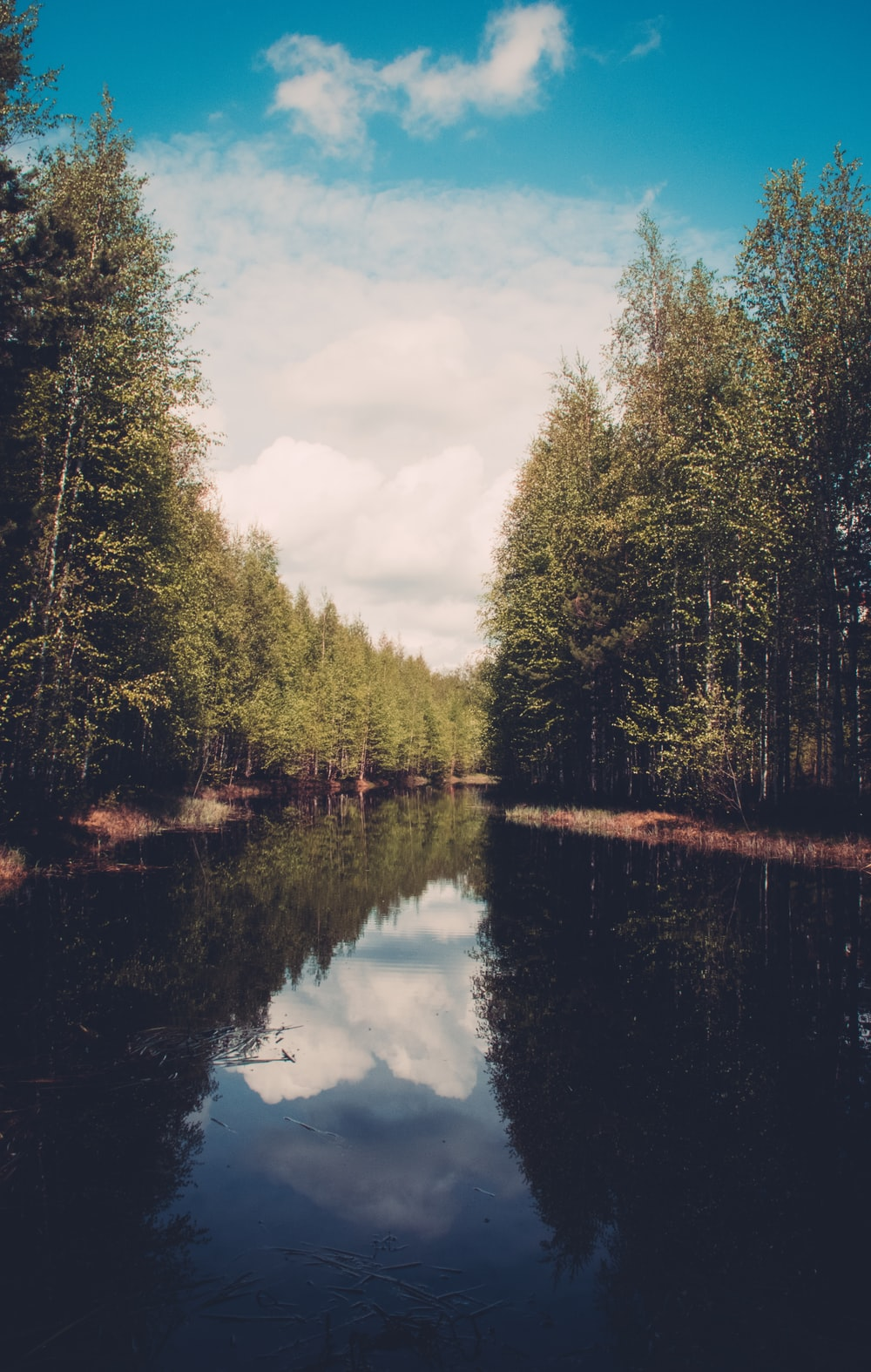 river between forest
