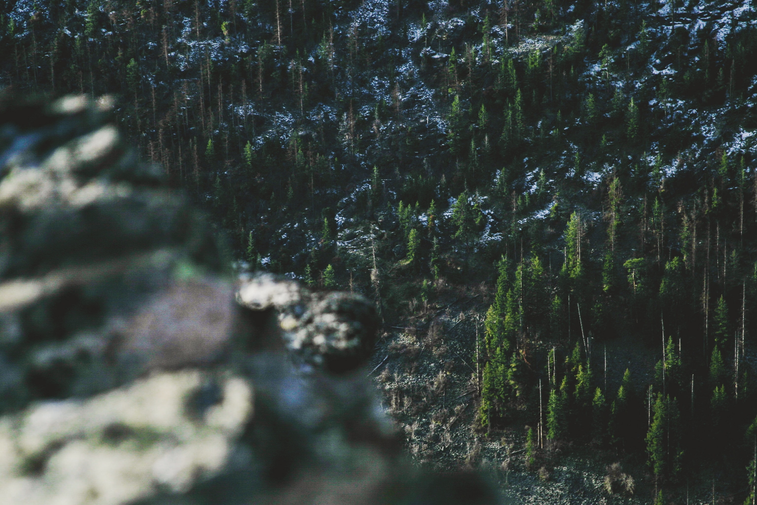 top view photo of green pine tree forest