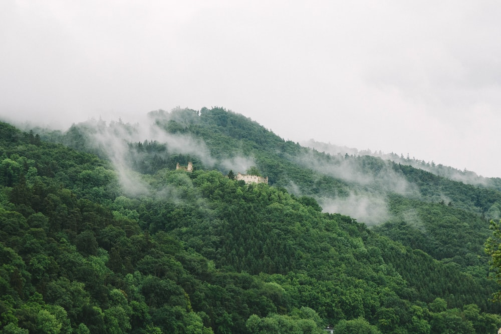 landscape photography of forest during cloudy day