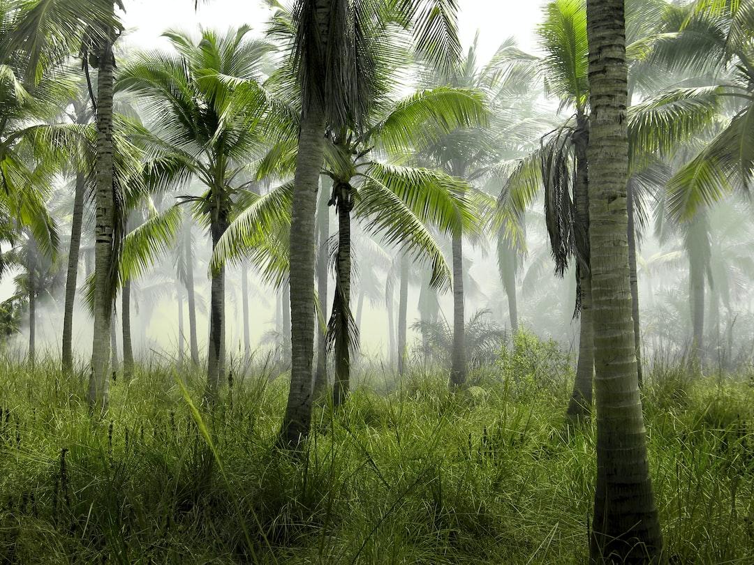 Useful in the Jungle