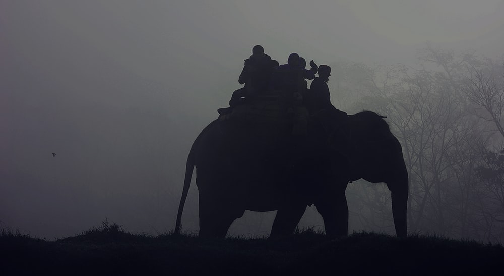 silhouette of people riding elephant