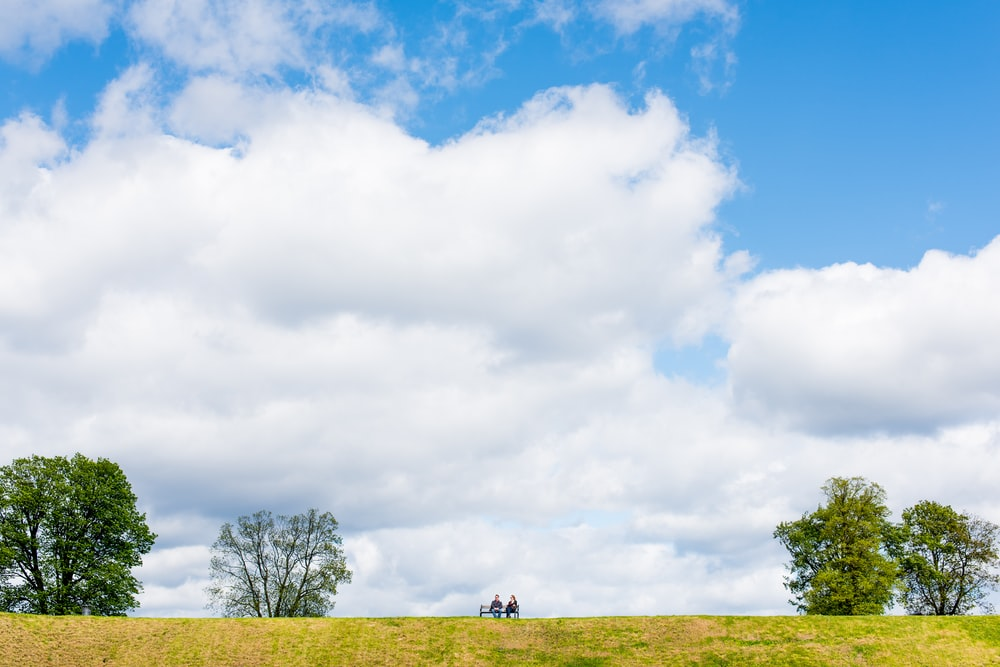 two people sitting on bench between four tall green trees under white clouds during daytime
