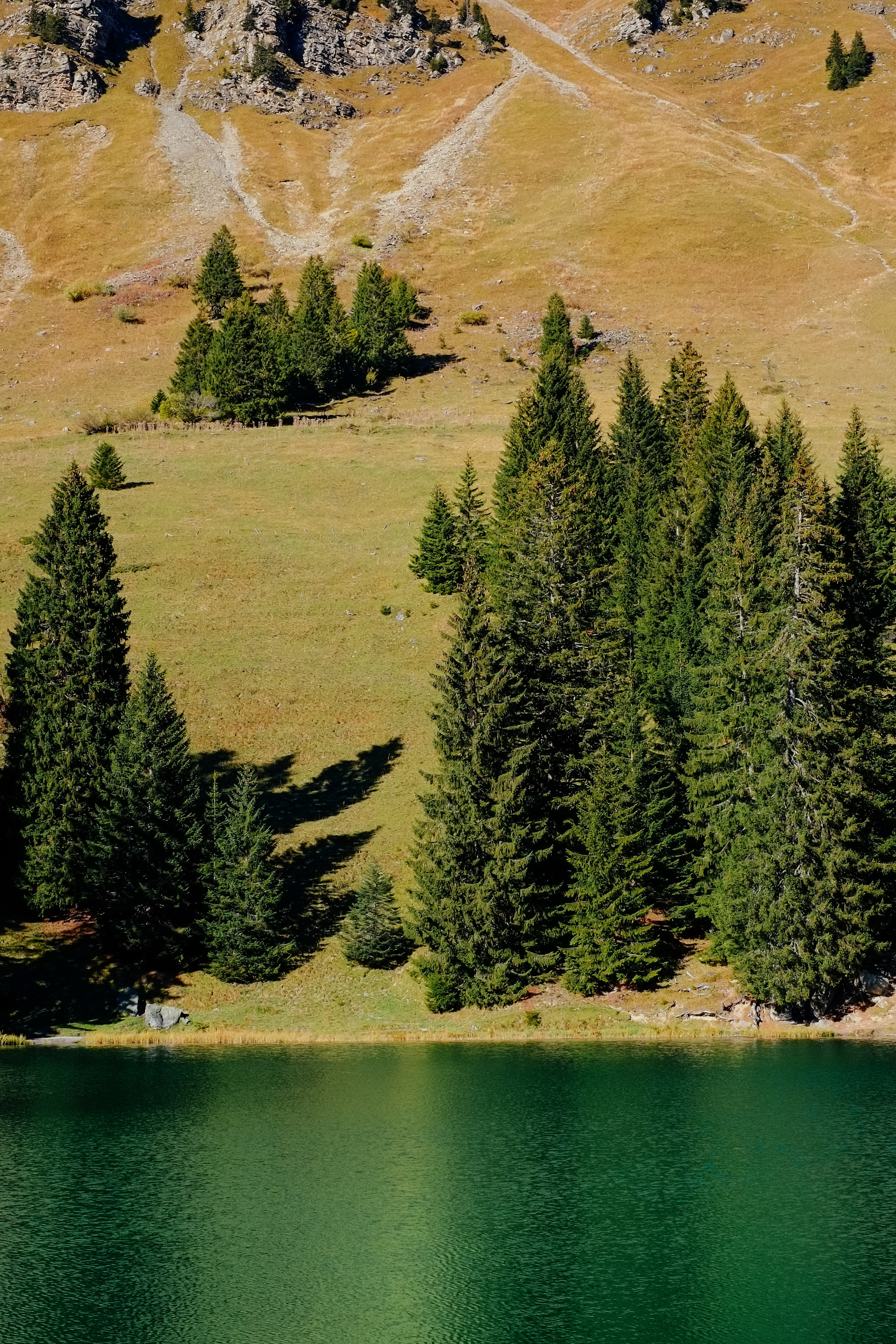 aerial photography of tall pine trees near body of water under sunny day