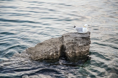 white and gray seagull sitting on rock surrounded by body of water