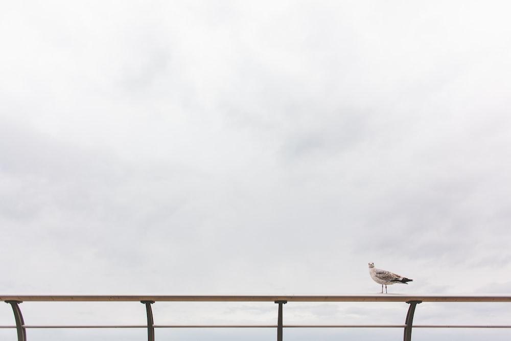 seagull on railing