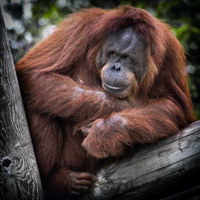 The ape in the crypto space… - About ElonApeWe are a charity meme token focused on elephant preservation.Each transaction gets taxed a fee of which one portion goes to the charity wallet, one portion is burnt, and another goes to all wallet holders. The charity wallet is used to make donations to charities focused on elephant conservation.Everything will be announced on our official news channels, upcoming features, NFTs drops, donations, etc.Stay tuned and keep STAMPEDING!