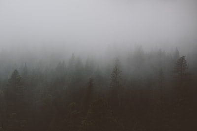 aerial view photograhy of green trees under fog grey teams background