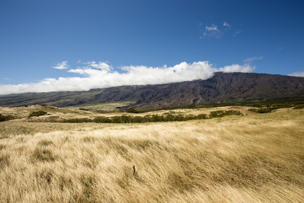 landscape photo of brown grass field and mountain under blue saky