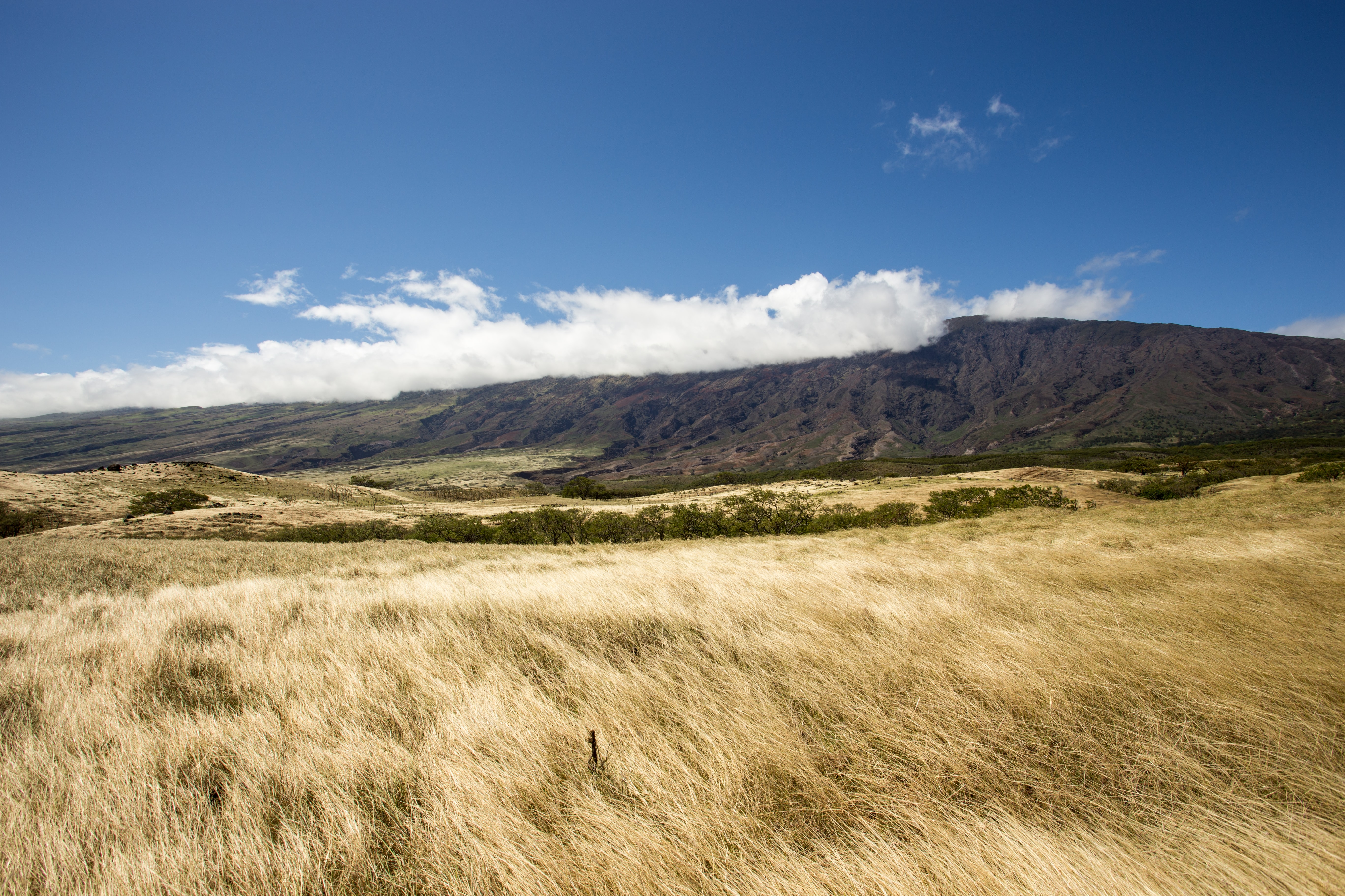A field of dry grass at the food of a long mountain range