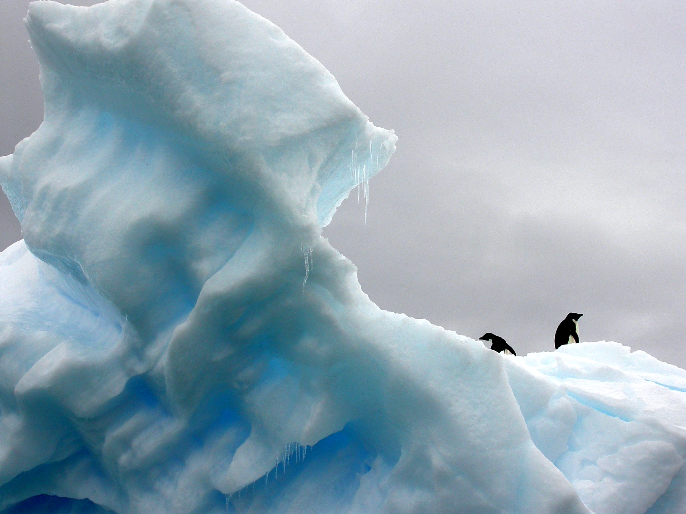 Two penguins walking on an irregularly shaped light blue iceberg