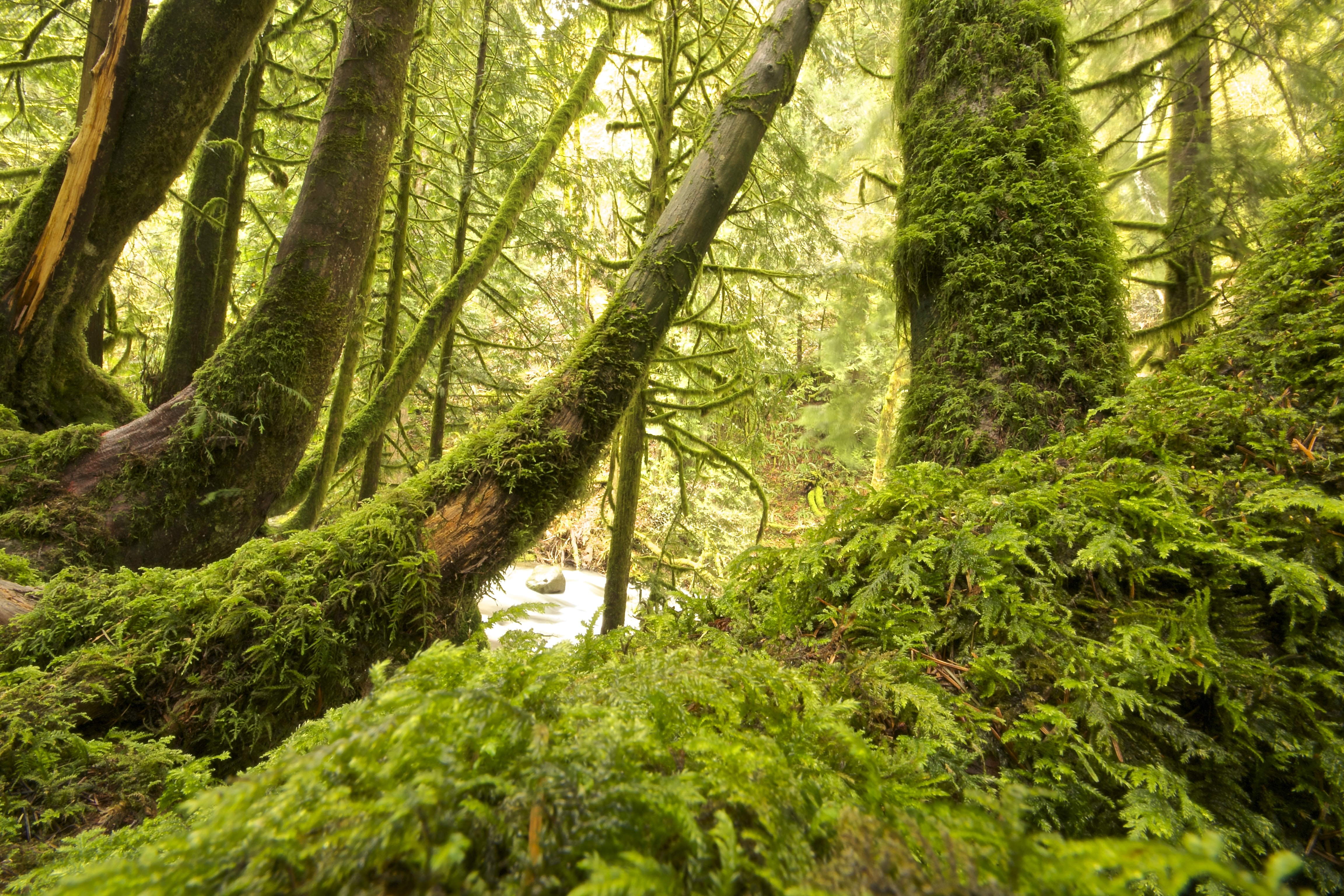 gray trees covered with moss