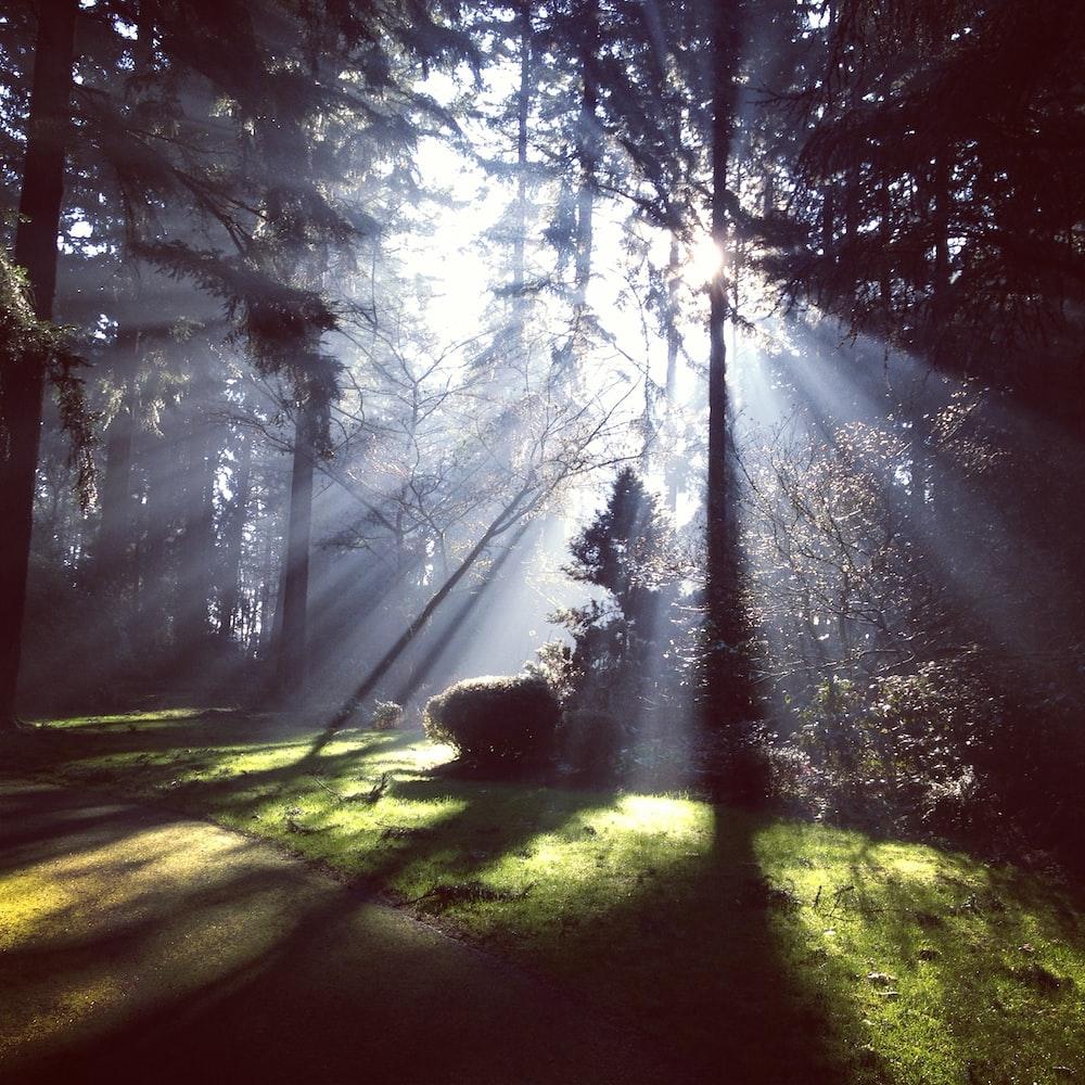 daylight peeking through green trees