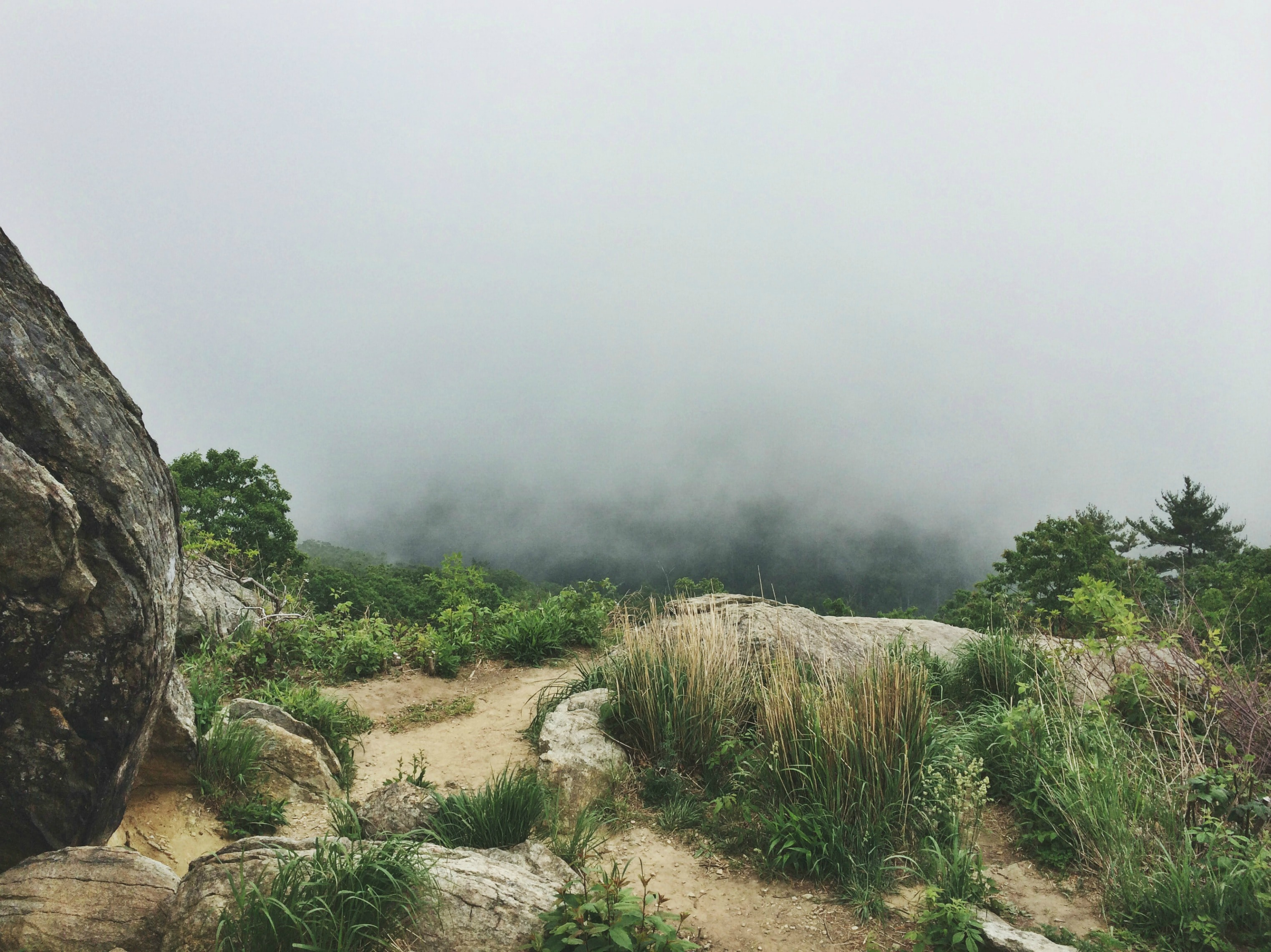 A grassy ledge overlooking a mist-shrouded chasm