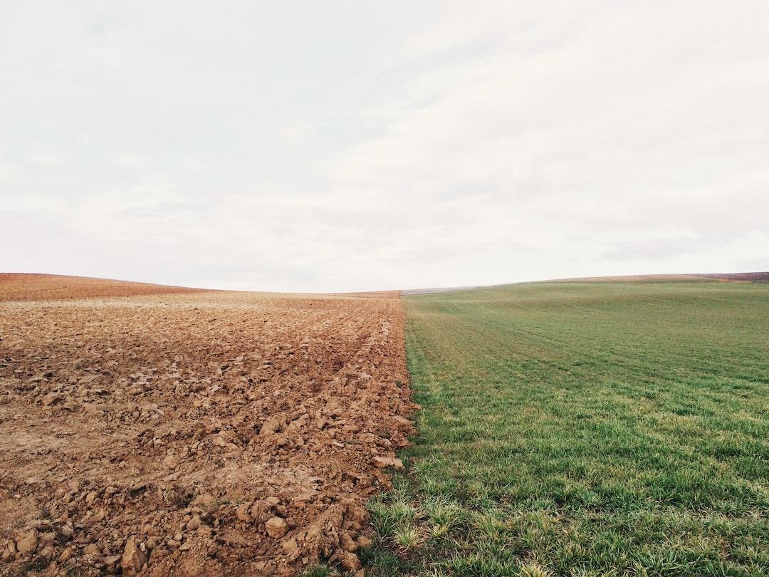 Kryzys klimatyczny można zwalczać wielkimi plantacjami w regionach pustynnych