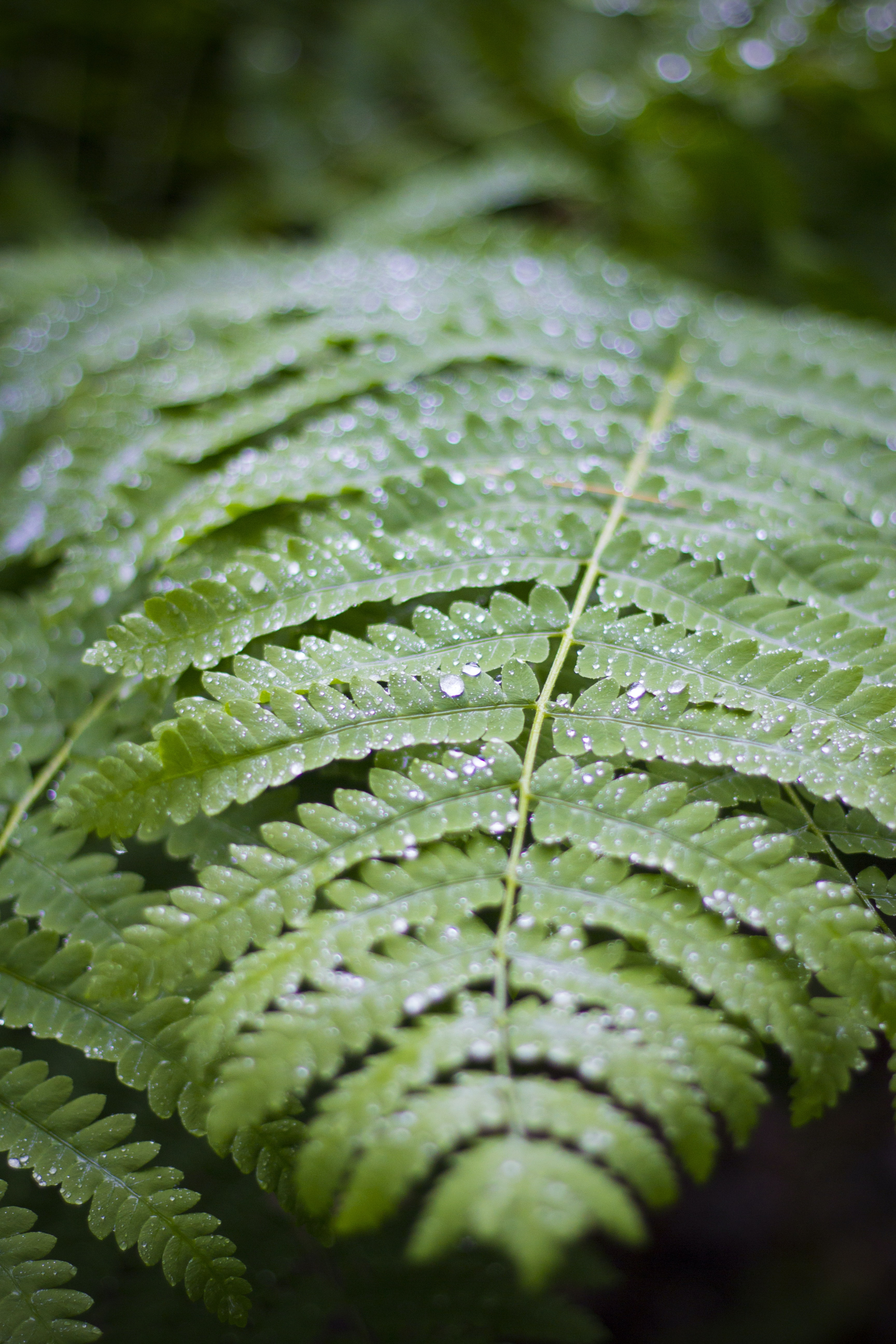 green leaf in closeup photography