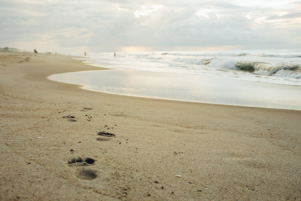 footprints on beach sand under cloudy sky