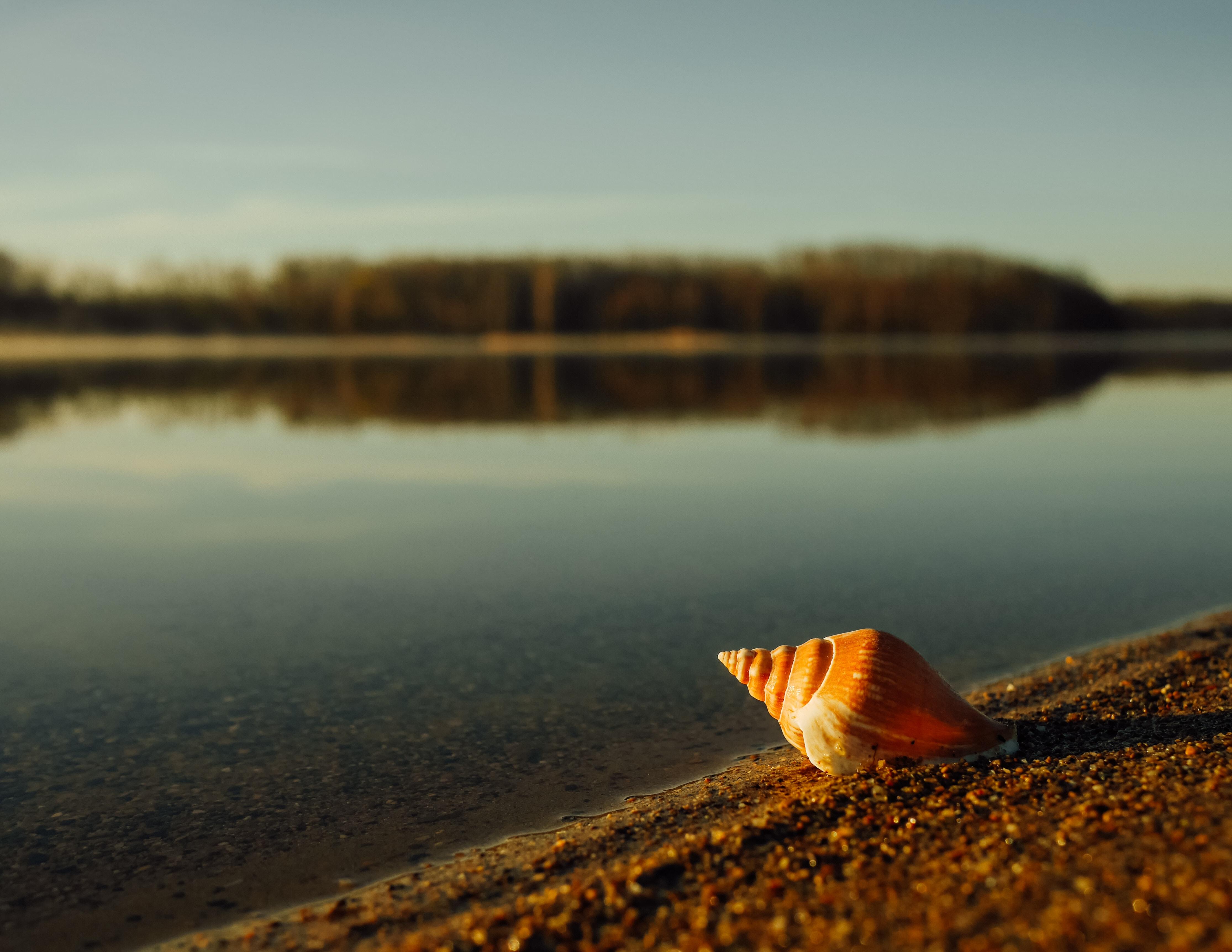 Shell macro shot at the sand coastline