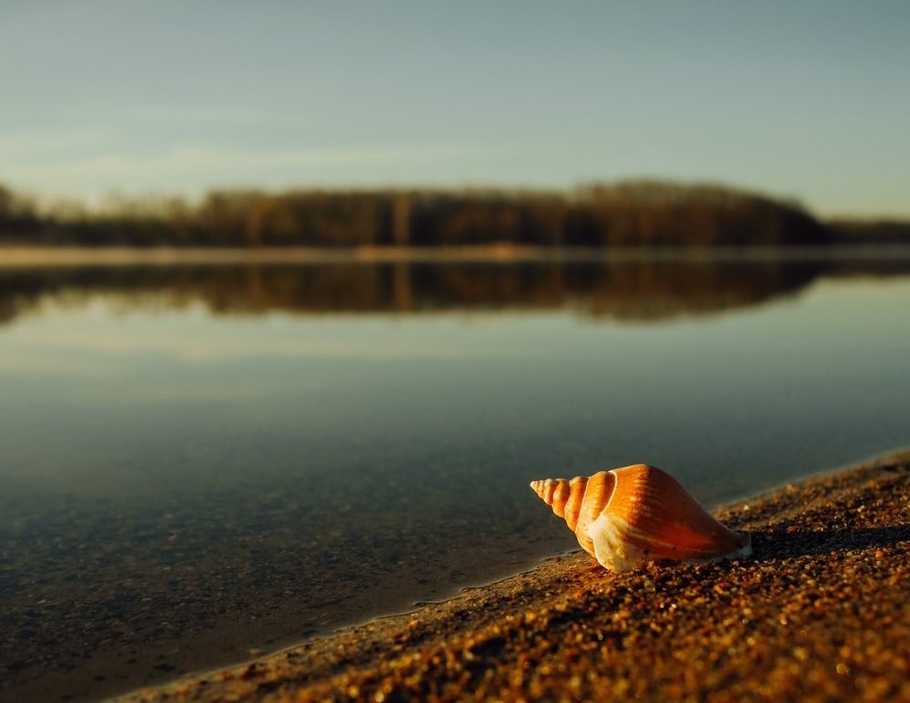 beige and brown seashell near body of water under blue sky