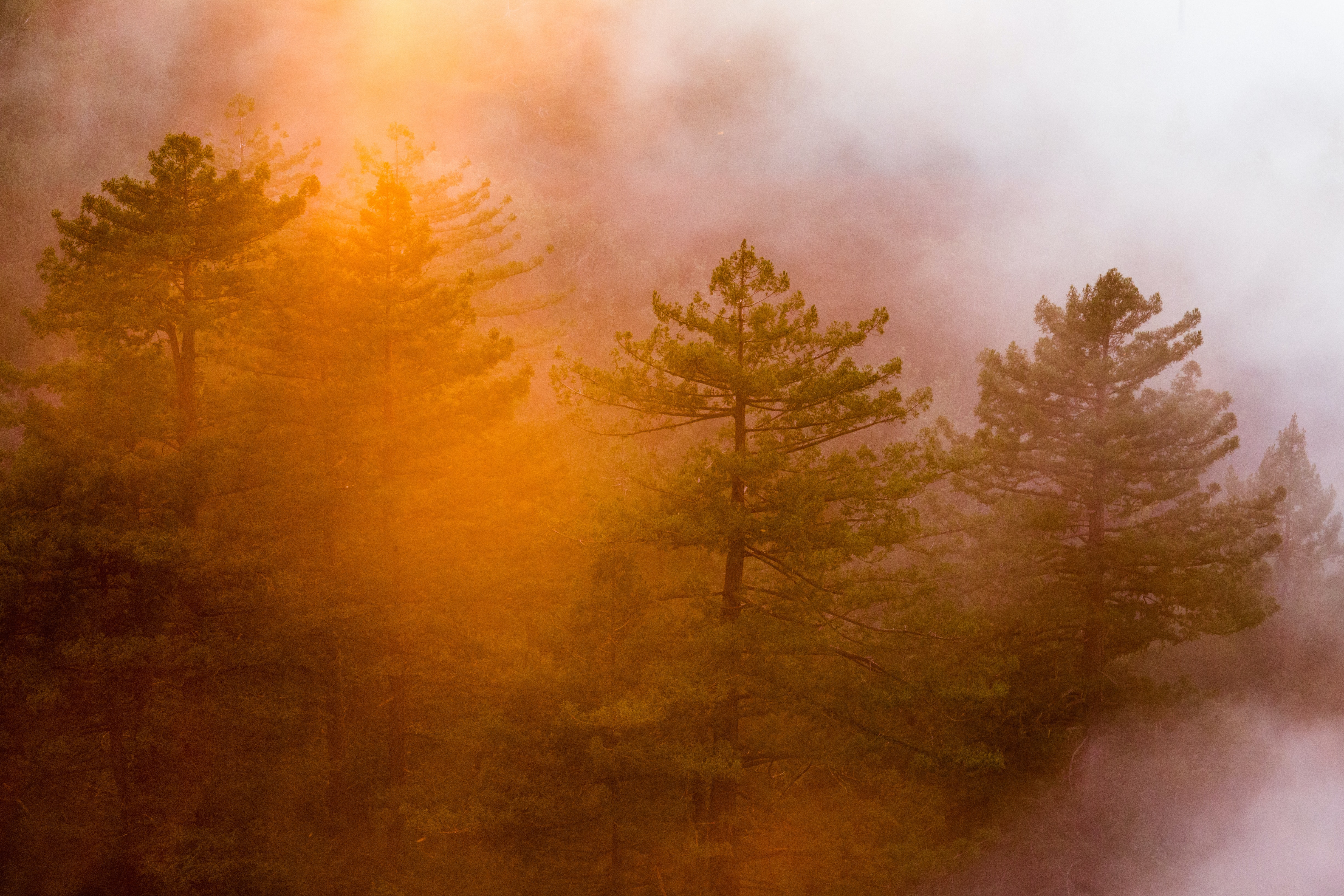 An orange-hued shot of a group of trees in Big Sur