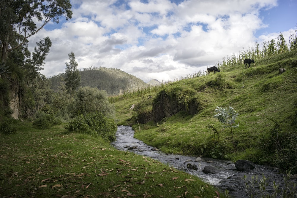 landscape photography of canal between hill surrounded by trees