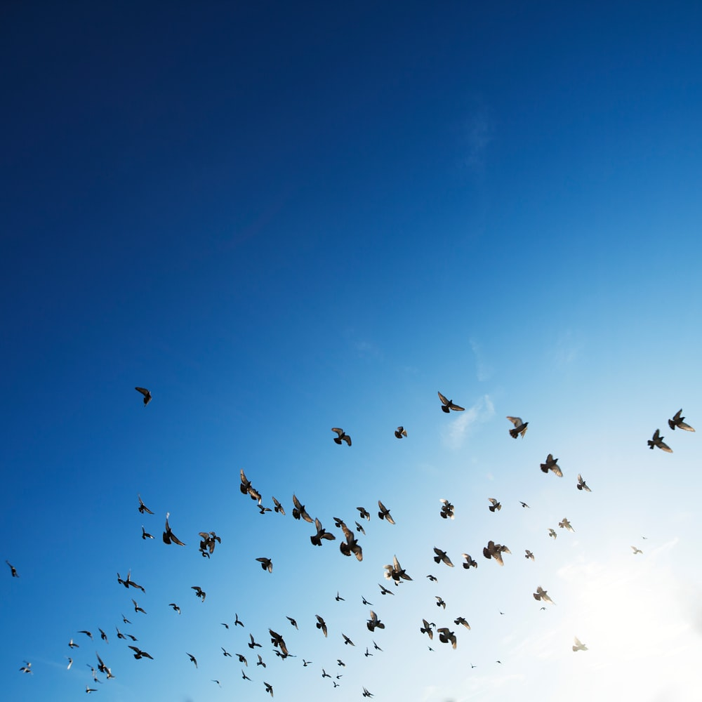 flock of bird flying in sky