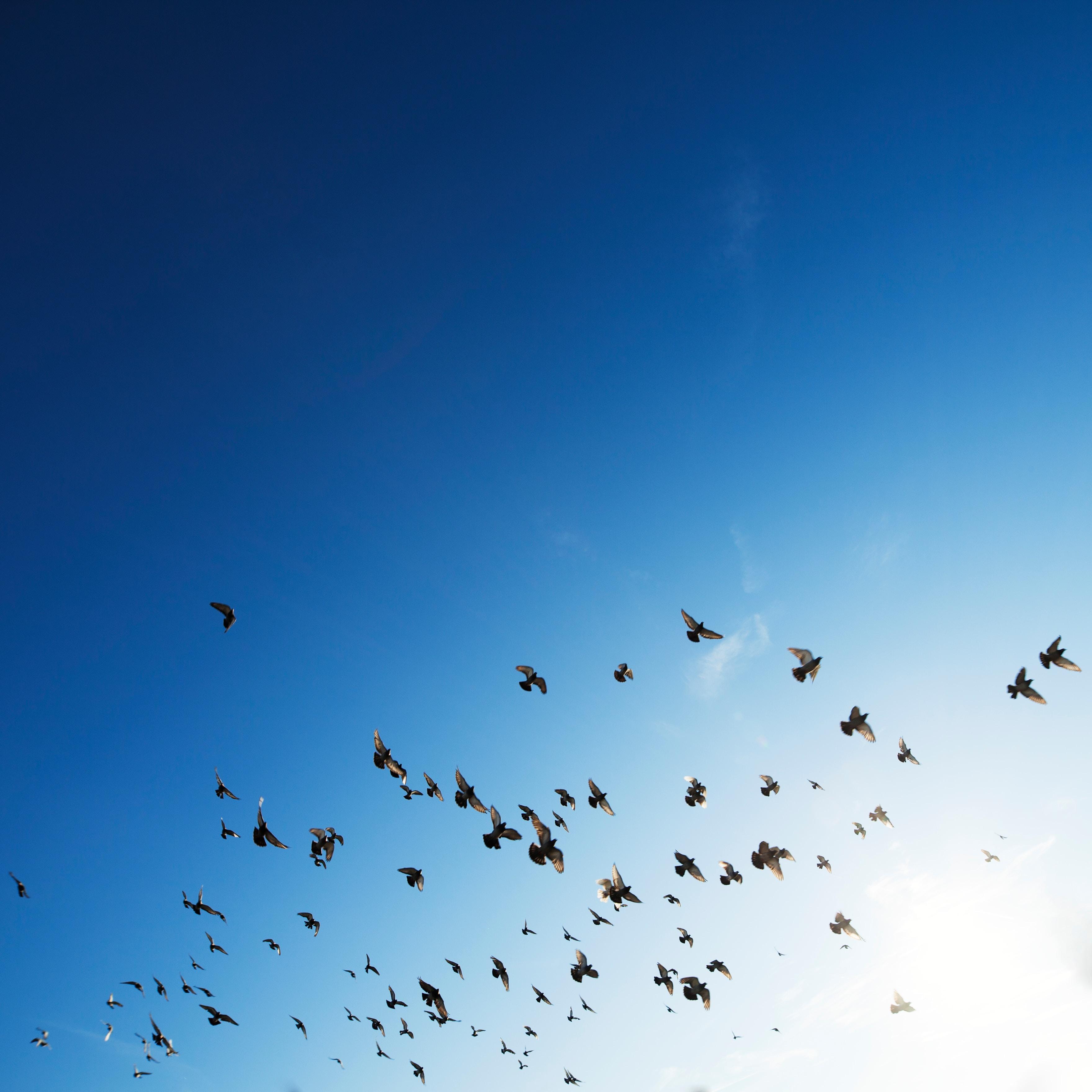 Bird Wallpapers Free Hd Download 500 Hq Unsplash