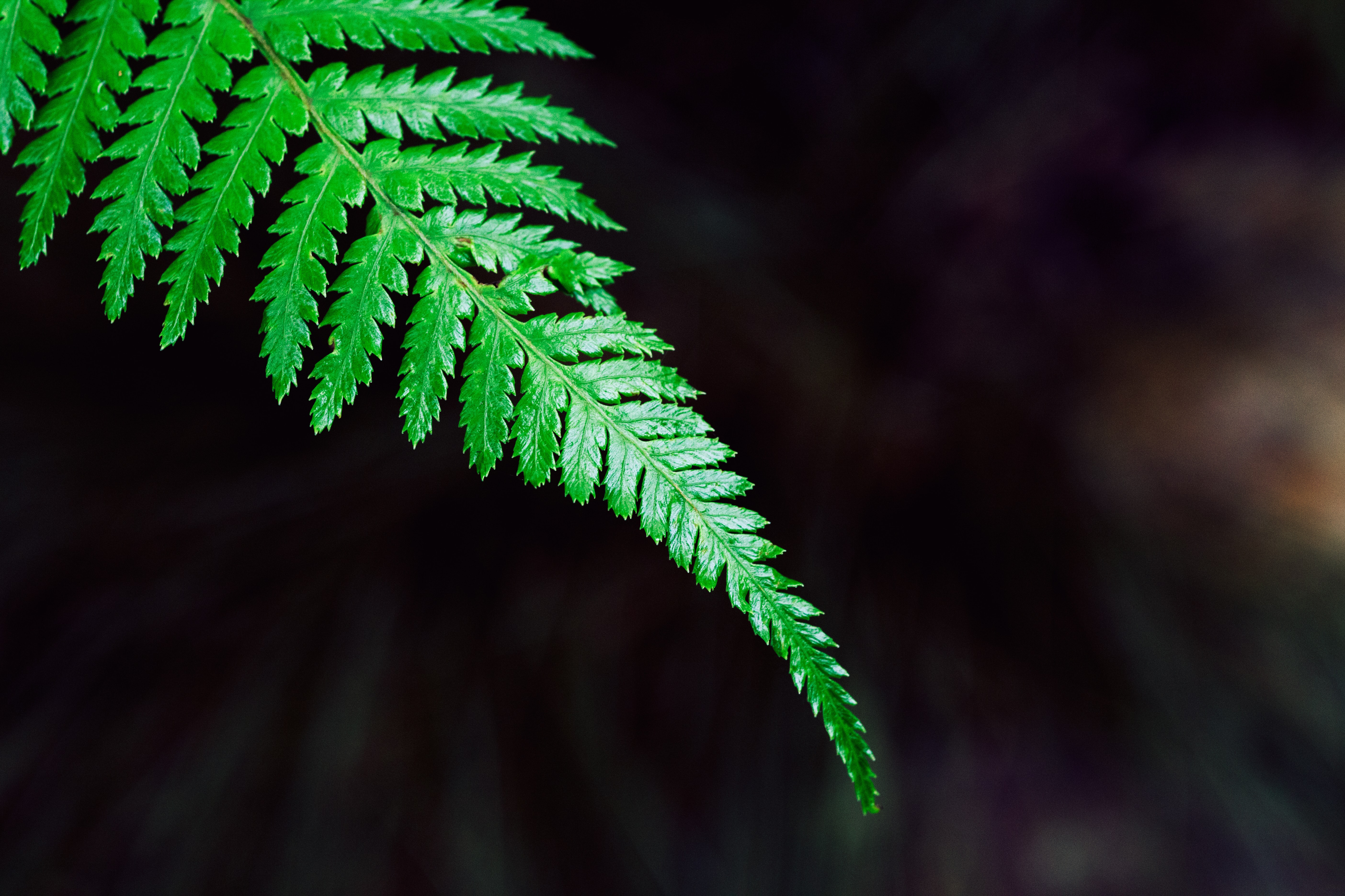 Leaves on a green fern plant
