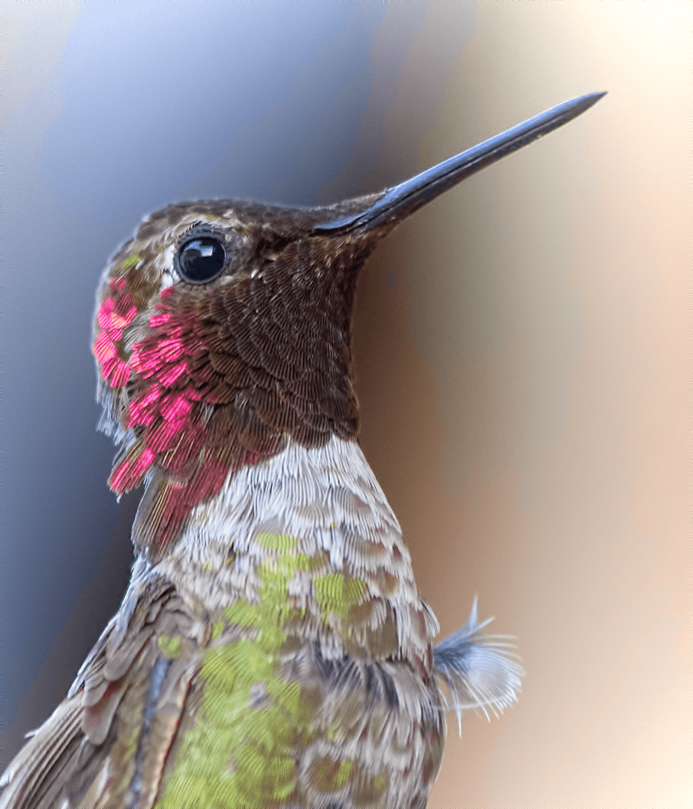brown, green, and red hummingbird close-up photography