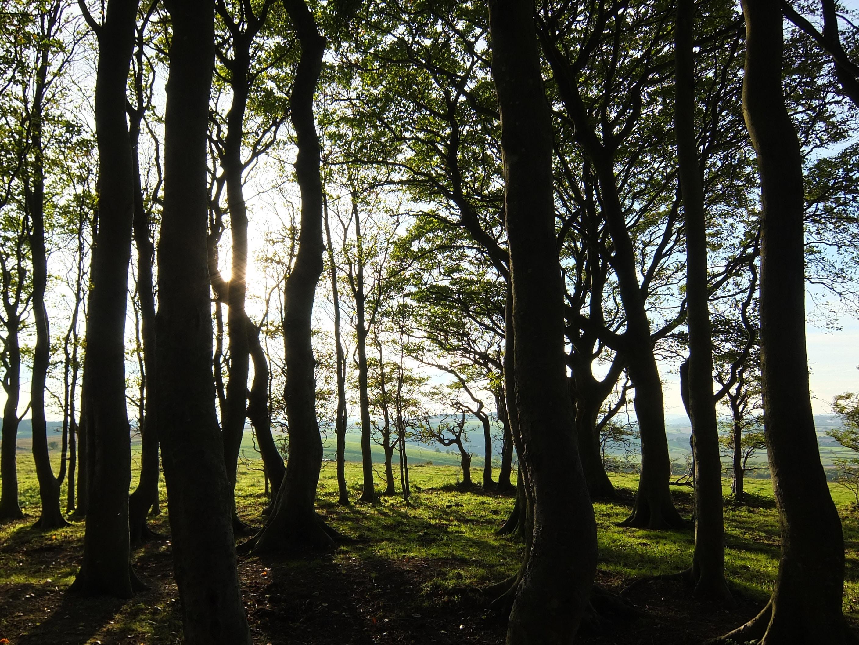 A small grove casting long shadows as sun breaks through the branches